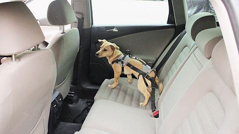 Autosicherheitsgeschirr Travel Protect Größe 4 (L)